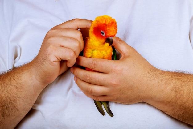Seduto su un palmo di una mano l'uomo sta giocando con il pappagallo