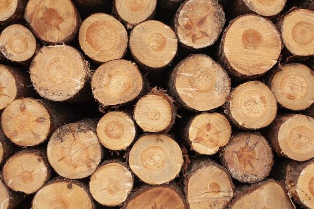 Selezione di ceppi di legno in campagna