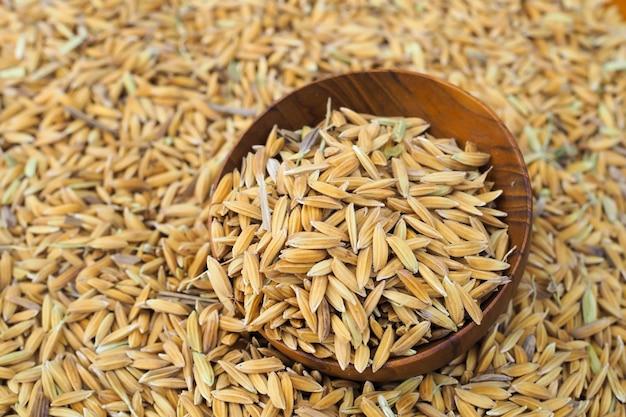Semi di risaia in ciotola di legno sul seme di risaia