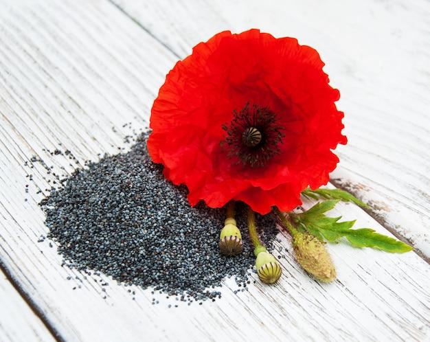 Semi e fiori di papavero