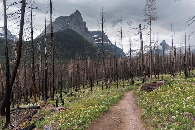 Sentiero che attraversa una foresta, st. mary falls trail, continental divide, going-to-the-sun road, gla