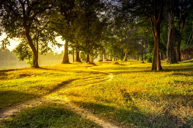 Sentiero forestale bellissimo paesaggio estivo