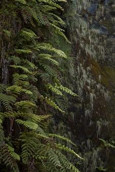 Sentiero naturalistico chiamato levada di 25 fontes situato nell'isola di madeira