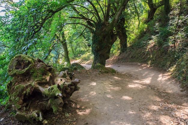 Sentiero nei boschi