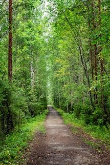 Sentiero nella fitta foresta. verticale.