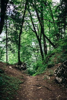Sentiero nella foresta