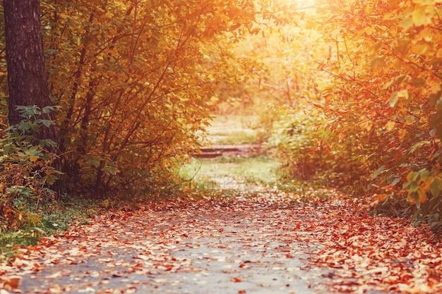 Sentiero per pedoni autunno nella scena della natura di alberi gialli nel parco autunnale