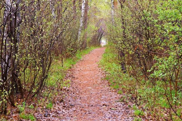 Sentiero tra gli alberi. paesaggio primaverile tunnel naturale