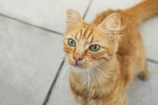Senzatetto simpatico gatto sul marciapiede strada.