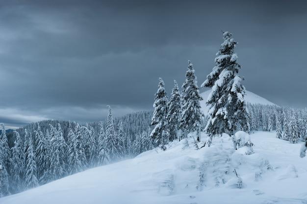 Sera d'inverno in montagna, tutti gli alberi ricoperti di neve bianca, paesaggio natalizio
