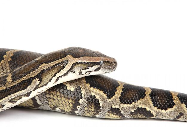 Serpente da vicino