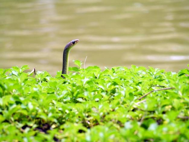 Serpente in natura