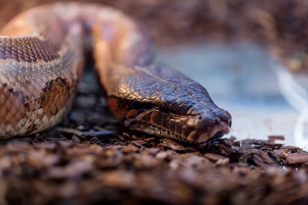 Serpente marrone in terrario per la decorazione domestica