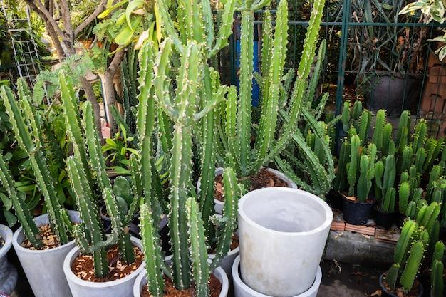 Serra decorata con vasi di piante