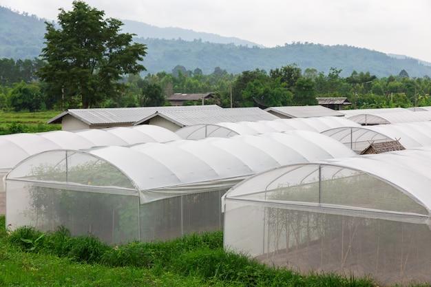 Serra, fattoria dei meloni
