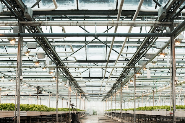 Serra leggera e produzione di frutta e verdura.