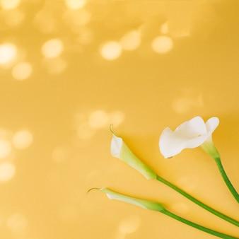 Set di belle fioriture bianche fresche