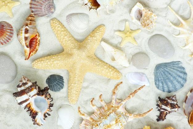Set di conchiglie sulla sabbia bianca
