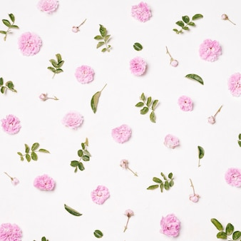 Set di fiori rosa e foglie verdi