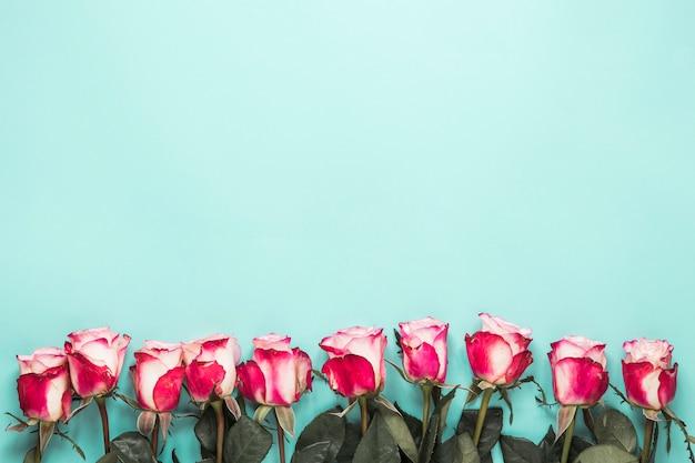 Set di rose fresche con foglie verdi