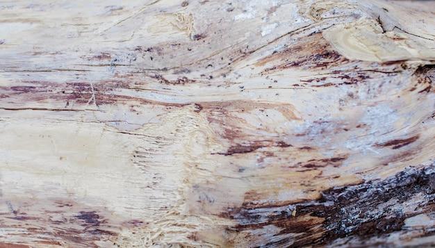 Sezione di albero in legno. tagliere vuoto in legno. vista dall'alto di un ceppo di albero