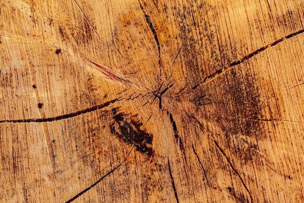 Sezione di taglio in legno di un albero come sfondo