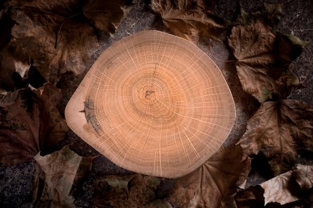 Sezione trasversale di ceppo di legno con anelli di albero con foglie di acero essiccate.