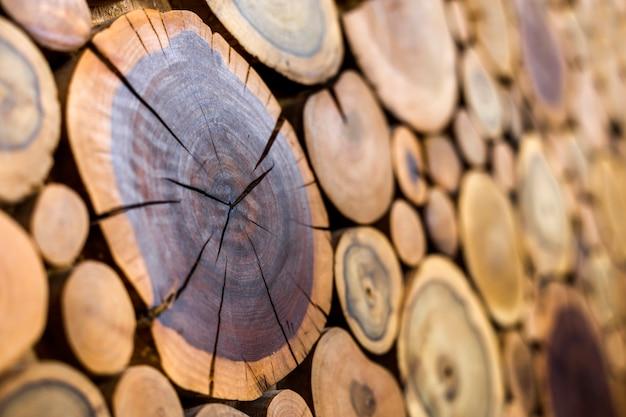 Sezioni tagliate ad albero con anelli annuali