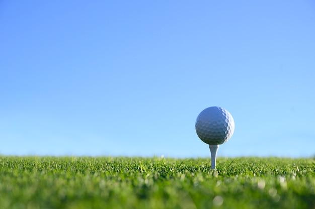 Sfera di golf in un t bianco