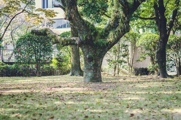 Sfocato dell'albero nel giardino, giappone