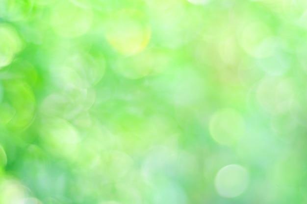 Sfocatura albero verde con sfondo di luce bokeh