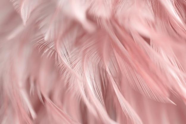 Sfocatura uccello polli piuma texture di sfondo