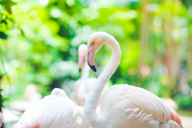 Sfondi naturali flamingo