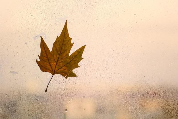 Sfondo autunnale con foglia d'acero su una finestra con goccia di pioggia