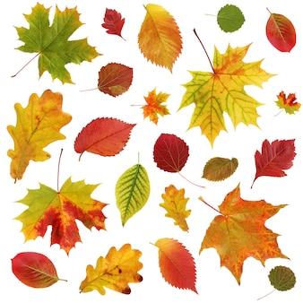 Sfondo autunnale con foglie rosse e gialle che cadono di quercia, acero, aspen, olmo e altri.