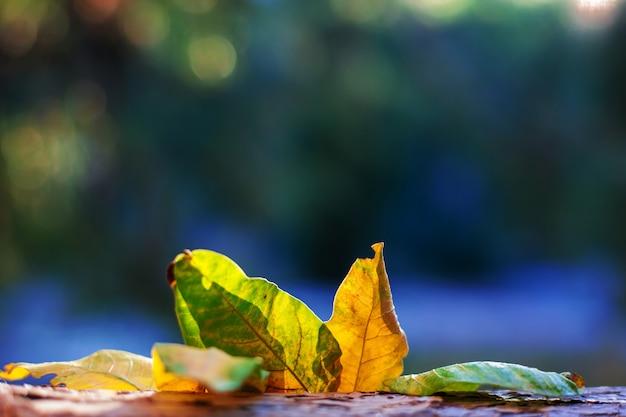 Sfondo autunno con foglie colorate caduta