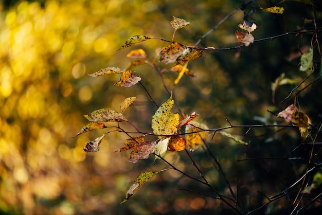 Sfondo autunno con foglie gialle all'alba.
