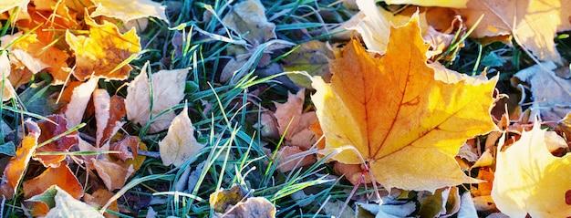 Sfondo autunno con foglie nel gelo