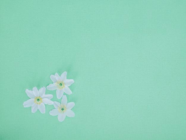 Sfondo azzurro fiori bianchi.