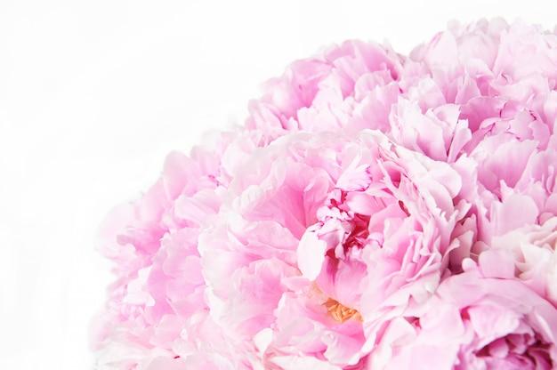 Sfondo con bellissime peonie di fiori.