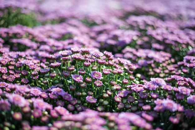 Sfondo con bellissimi fiori viola