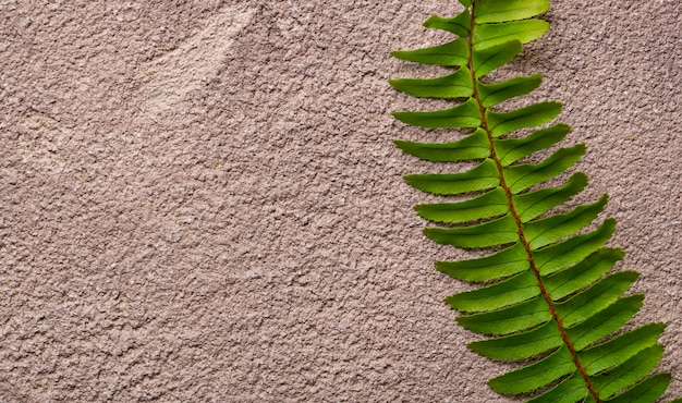 Sfondo con foglie di felce verde.