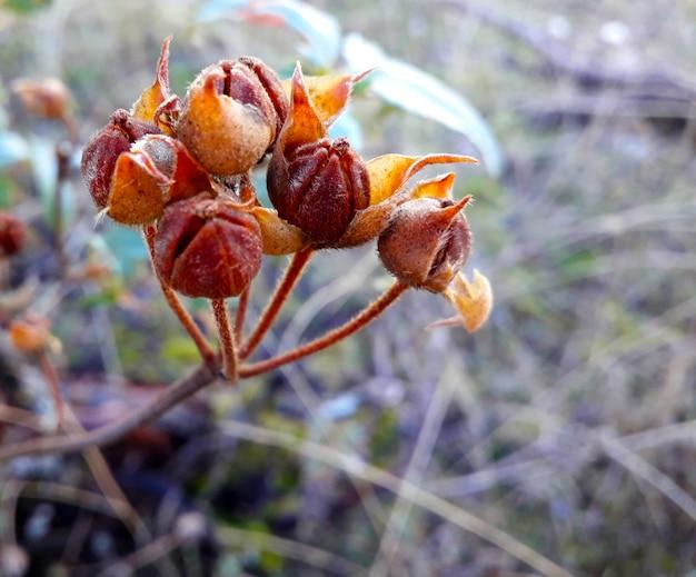 Sfondo con una pianta secca in autunno