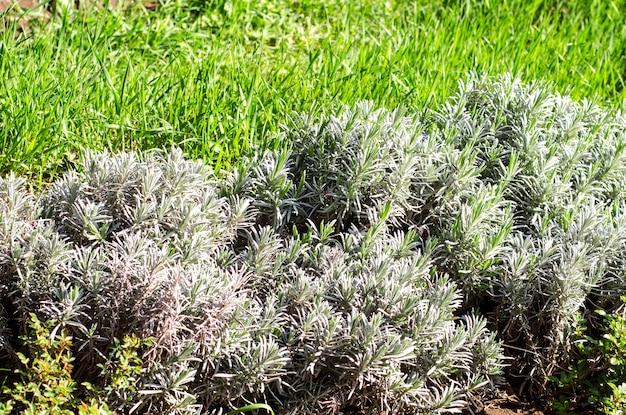 Sfondo da piante tropicali ed erba.