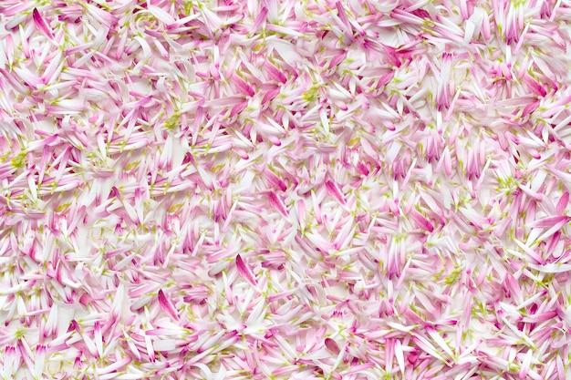 Sfondo da un gran numero di petali margherite.