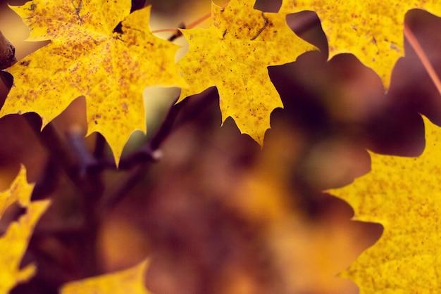 Sfondo dalle foglie d'autunno