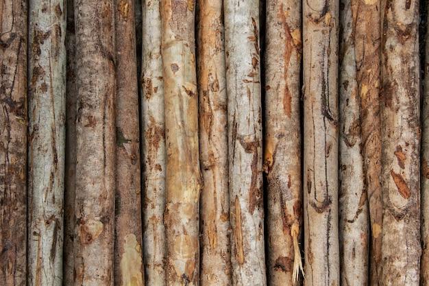 Sfondo del tronco di legno di eucalipto disposti a strati