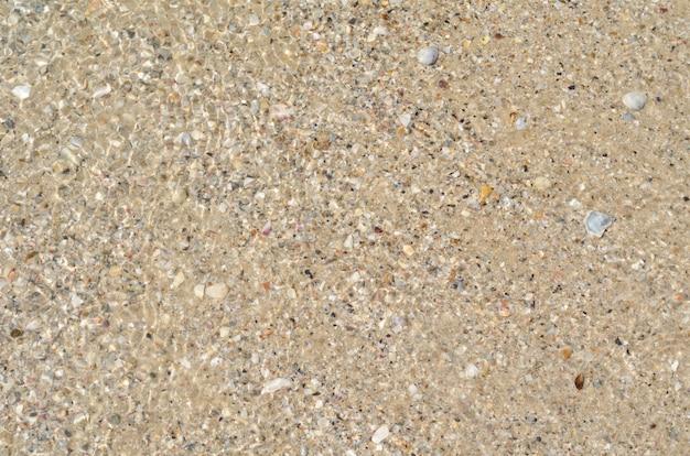 Sfondo della spiaggia di sabbia di mare e piccole conchiglie