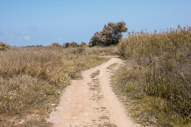 Sfondo della via in natura
