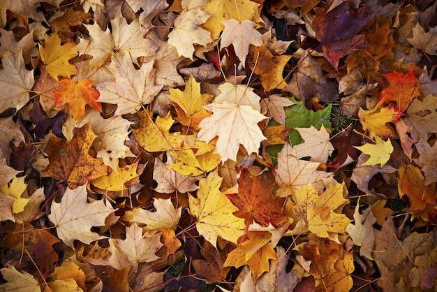 Sfondo di autunno